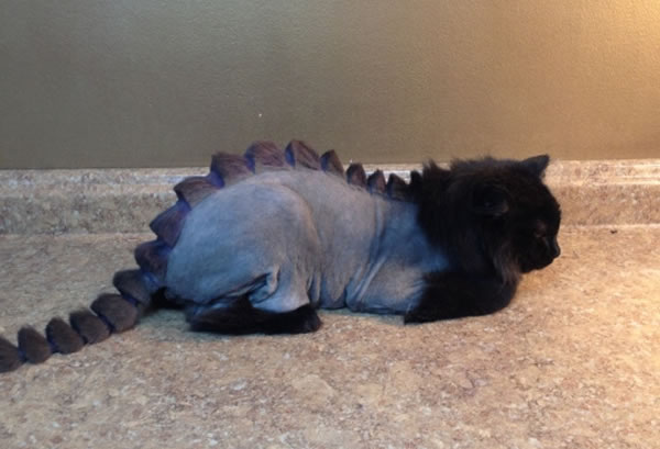 dragon-cat