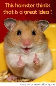 The hamster agrees.