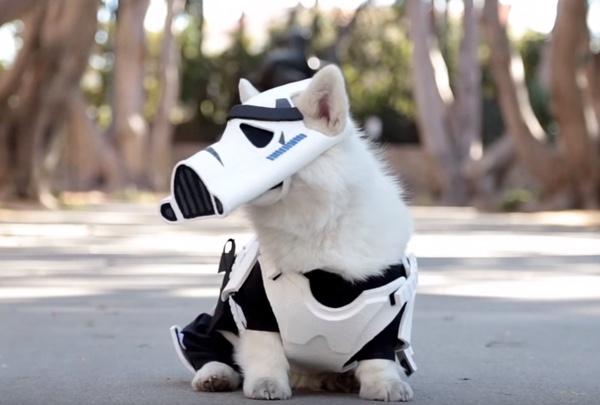 corgi-stormtrooper